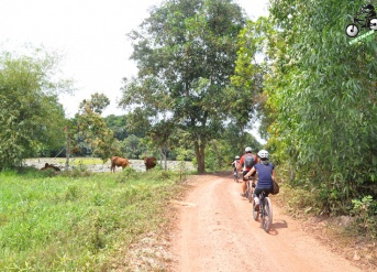 Cu Chi Tunnel Bicycle Trip 1 day